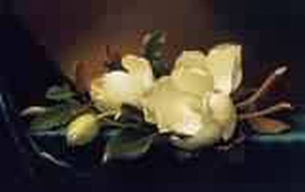 Two Magnolias and a Bud on Teal Velvet 1885 1895jpeg